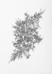 Táňa Adamová | kresba perem